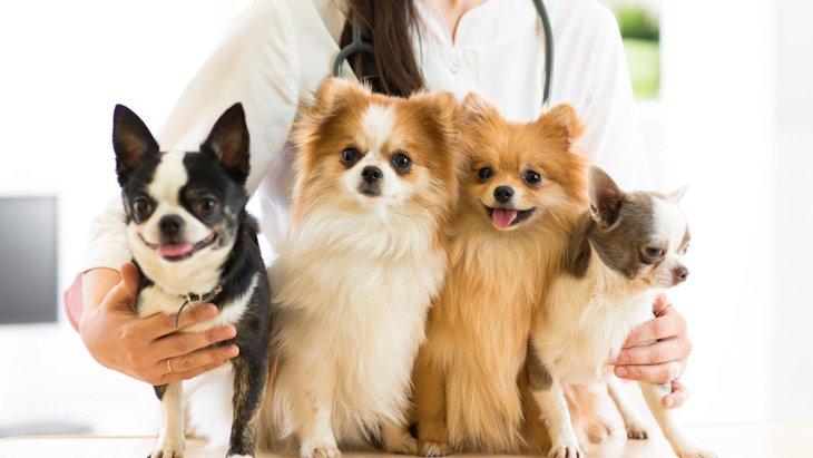 犬や猫と関わる仕事がしたい!動物看護師は資格がなくてもなれる?