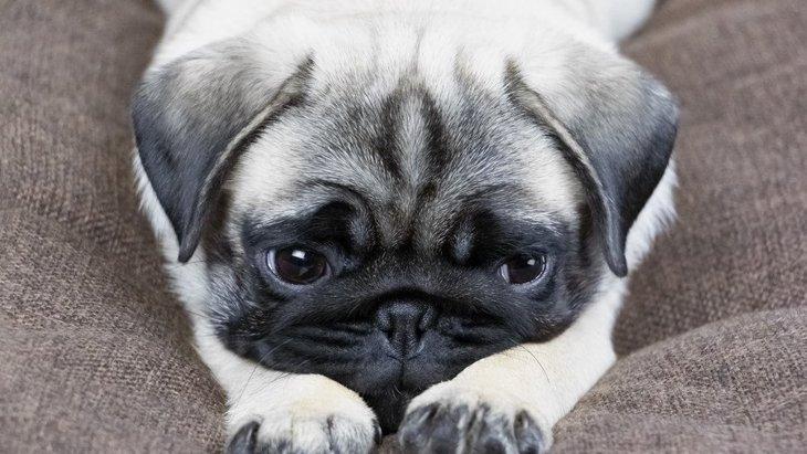 犬の超危険な『ストレスサイン』4選!こんな行動をしてたら必ず生活を見直して!