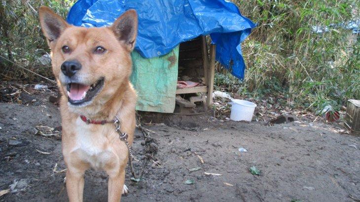 飼い主の死で取り残された外飼い番犬の保護。医療ゼロの悲しい現実