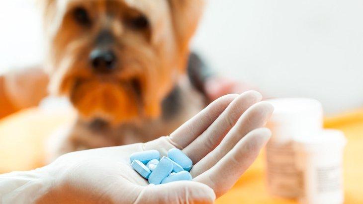 犬の薬の飲ませ方!上手に行うコツと嫌がる場合の対処法