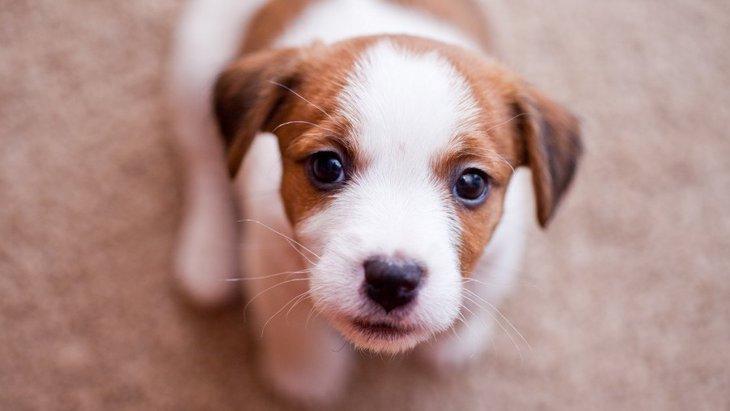 犬が飼い主を呼んでいるときの仕草や行動4つ