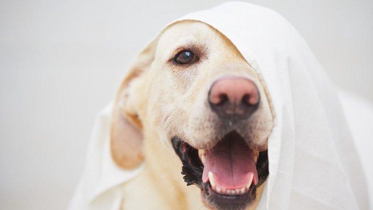 犬が『留守番中にいたずら』してしまうのはなぜ?3つの理由と解決する方法