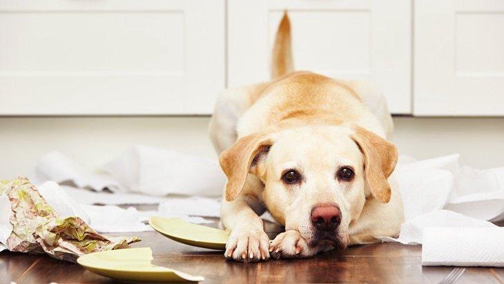 犬がストレスを溜めすぎているときにする態度や仕草3選