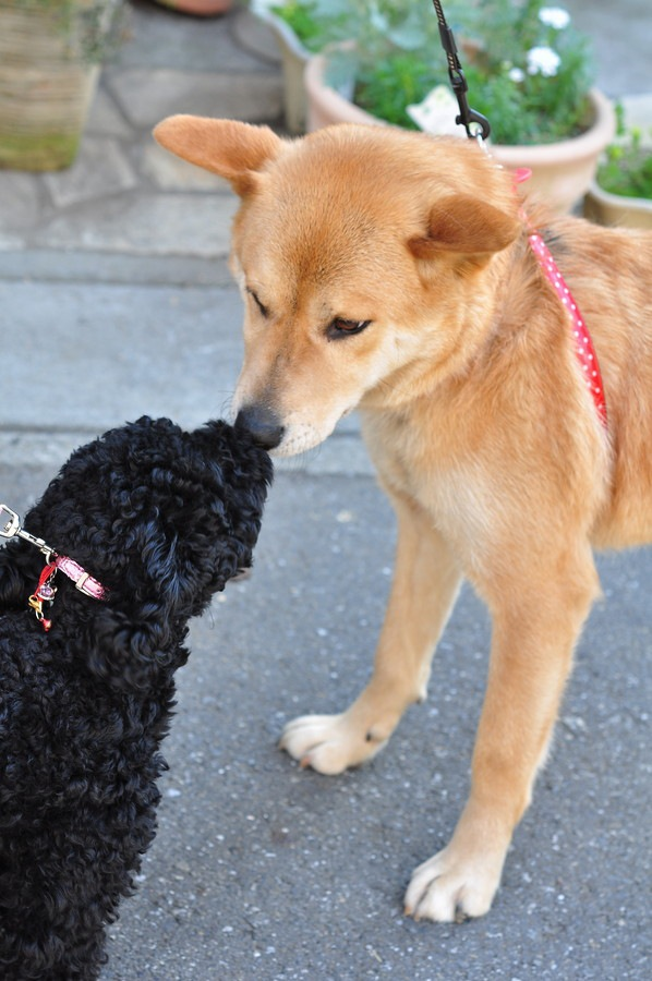 犬が他の犬に唸ってしまう『5つの心理』