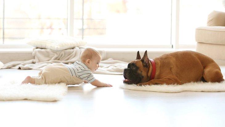 頼もしい相棒!犬が人の赤ちゃんを守ろうとする心理6つ