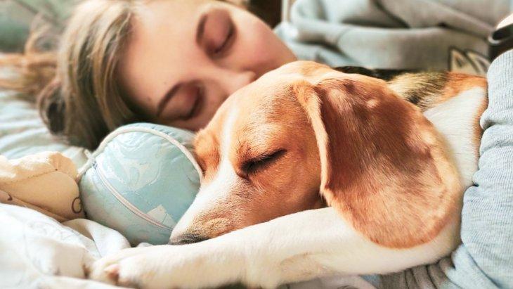 犬が寝ている時にピクピク動く理由4選!病気になっている可能性は?