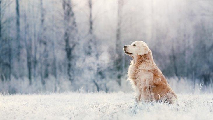 寒い季節に多い犬の病気5つ