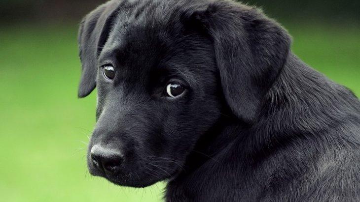 犬の性格が変わるタイミング5つ