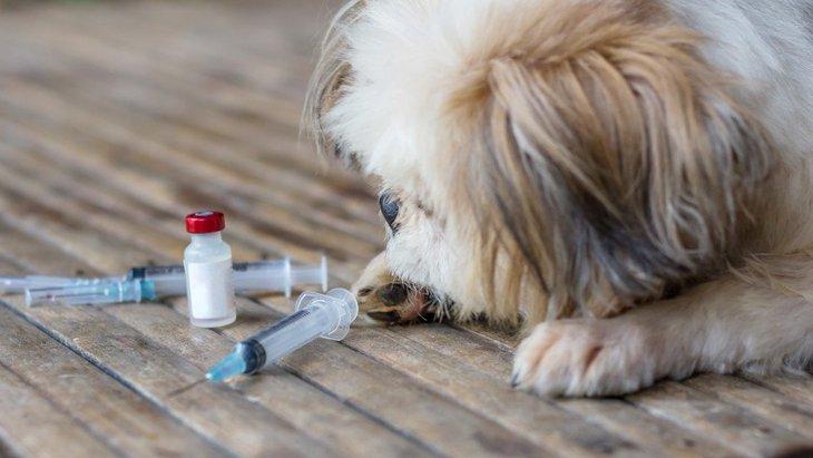 犬のワクチン!予防接種の時期や回数、種類や値段、注意点まで【獣医師執筆】