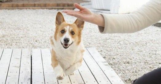 『ドジな子が多い犬種』3選!あなたの愛犬もこんな行動をしていませんか?♡