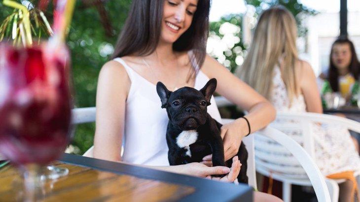 川越のドッグカフェおすすめ8選!ペット同伴でランチ、スイーツが楽しめる犬カフェ