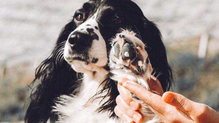 犬の肉球によく起こるトラブルと予防策