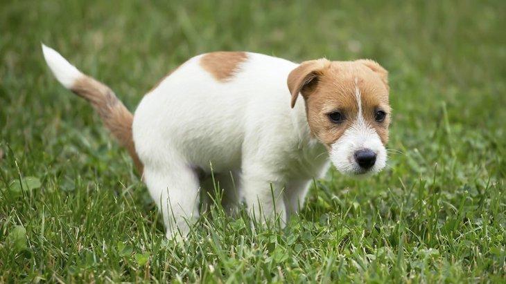 犬がお尻で歩いてたら要注意!病気が潜んでいることも?