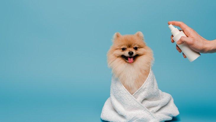 犬の口臭スプレーのおすすめ5選!効果や口コミは?手作りできる?
