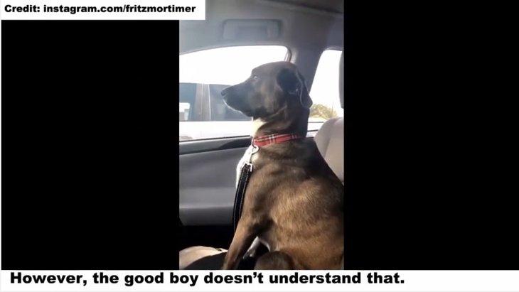 歯科に連れて行った飼い主を怒って無視する犬の表情が愛らしい!