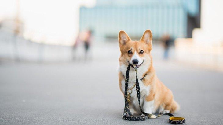 『犬の散歩あるある』6選!あなたにもこんな経験、ありませんか?