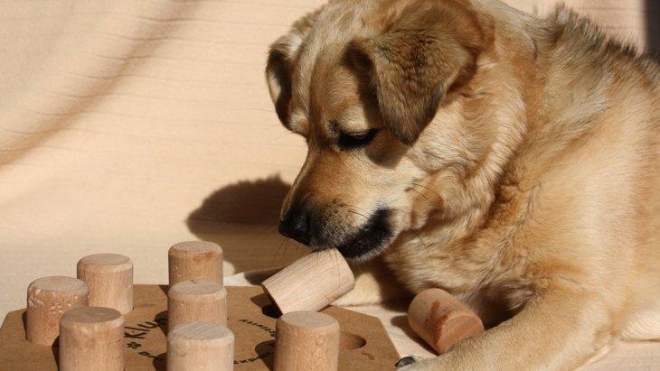 犬の『ノーズワーク』って何?リフレッシュできるやり方とメリット5選