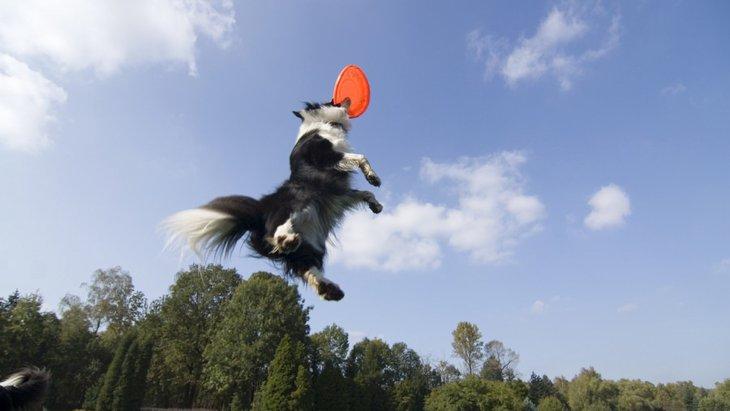 投げる犬のおもちゃ!人気ランキングBEST5