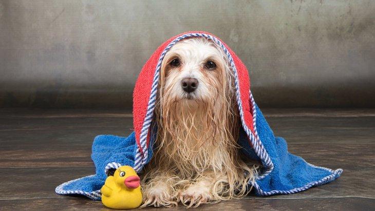 愛犬と一緒にお風呂に入るのはアリ?ナシ?