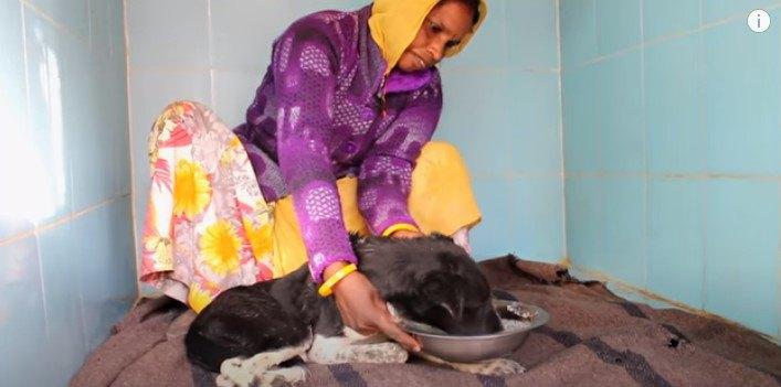 病気でひどく衰弱し汚水に浸かっている犬。一本の電話から救われた命