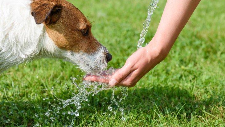 犬が水を飲むとむせる!原因と対策