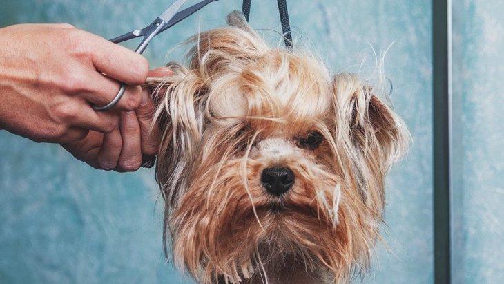 犬をトリミングしないとどうなる?考えられるリスク6つ