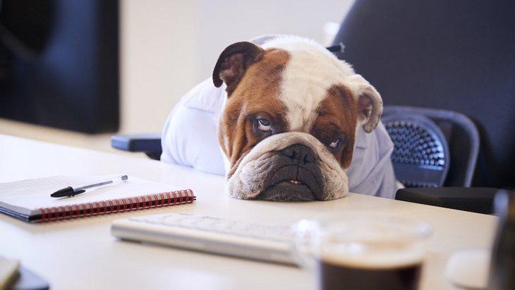 犬が『やる気ないとき』に見せる仕草や行動3つ