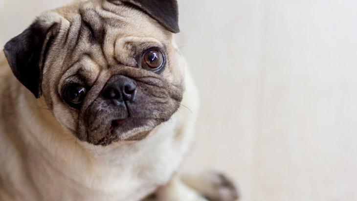 犬が『分離不安症』になっている時の初期症状7選