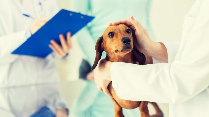 犬が病院で震える時にしてあげたい対策3つ