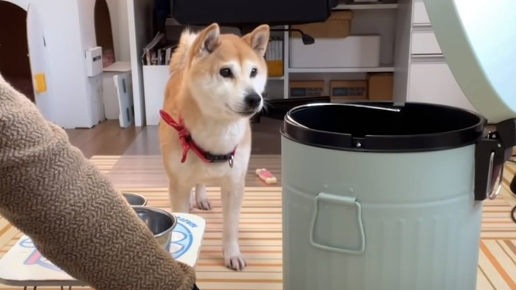 新しい仲間?ゴミ箱が参入!柴犬ちゃんの反応は?