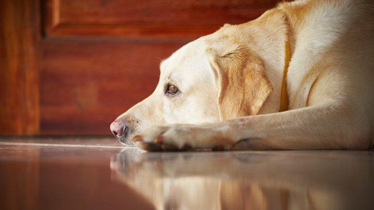 犬用フェロモン製品が分離不安に効果を発揮するかどうかの研究結果