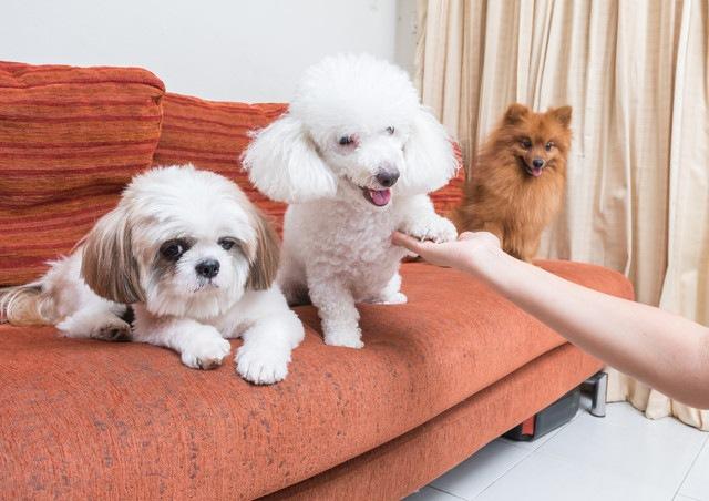 犬の毛玉ができる原因とは?取る方法から気を付けたい犬種まで