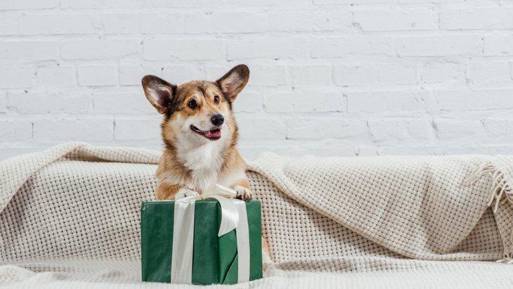 愛犬の特別な日に♡犬が喜んでくれる『プレゼント』4選