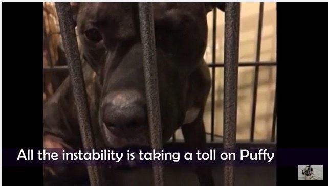 二度も飼い主から裏切られ、二度もシェルターに入れられた犬