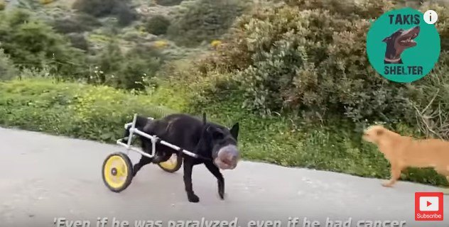 末期がん、下半身麻痺…ブラック、人々の心を揺さぶった犬の15ヵ月