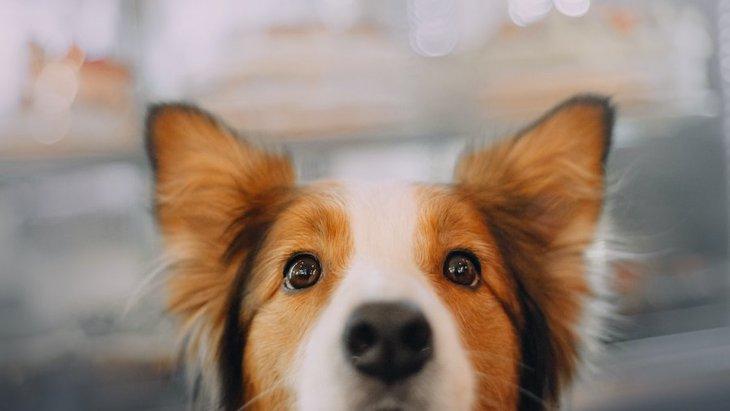 犬の毎日の日課って?何をきっかけに覚えるの?