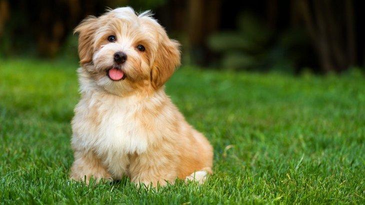 犬と楽しめる庭作り!コツとやってはいけないこと