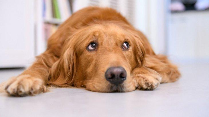 犬が『楽しくない時』にしている仕草や態度4選