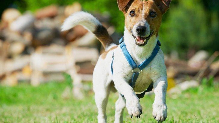 犬が興味津々な時に見せる仕草や態度5つ