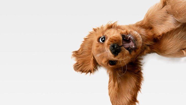 犬がいつもより『ソワソワしている』時の原因3選!病気が隠れている可能性も…?