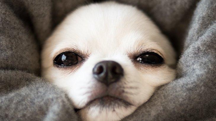 知っておくべき!犬がコタツに入る危険性4つ