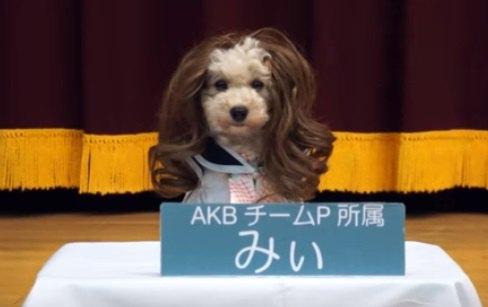 目指せアイドル!ワンちゃんズによる政権放送が可愛い♡
