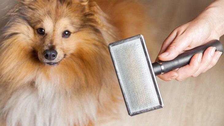犬用のスリッカーブラシの人気おすすめランキングTOP5!選び方や手入れの方法とは
