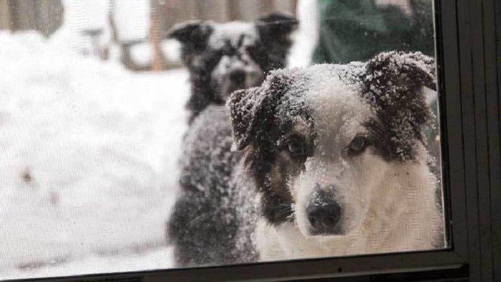 「犬は寒さに強い」冬の屋外の犬小屋が死ぬほど寒かった!