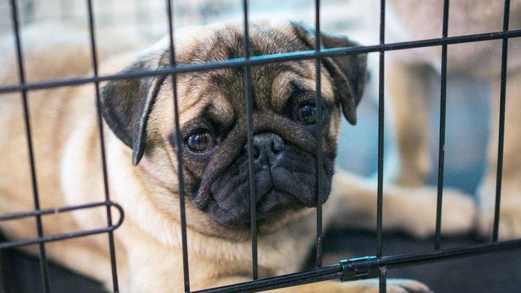 犬がケージから脱走してしまう原因4選!どう対策をすればいいの?
