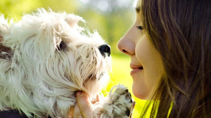 犬が脳のどの領域で人間の顔を判別しているのかが研究によって明らかに!