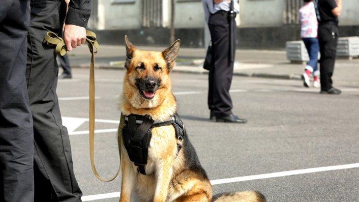 英国の動物虐待に対する法律改正とジャーマンシェパードのフィン