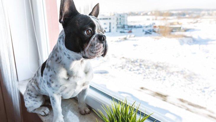 犬が暇そうにしているとき、何を考えているの?