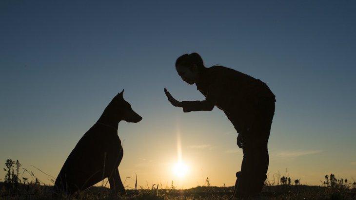 なぜ人と犬は共存できるのか?歴史からひも解く犬と人間の関係性