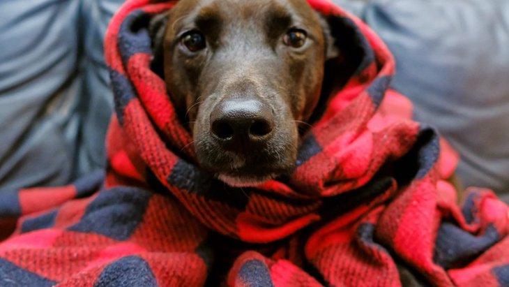 犬の震えが止まらない時にするべき対処法3つ